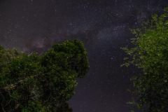 Chantilly Farm Milky Way