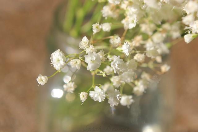 Restful flowers2