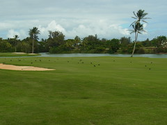 Kauai Lagoon Golf Club 388