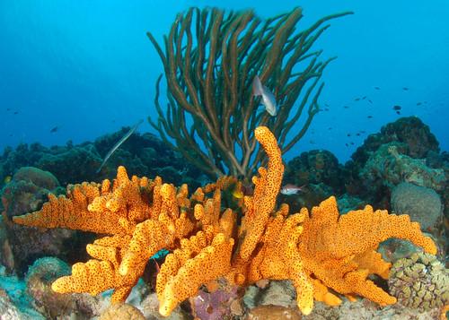 sea coral underwater caribbean reef bonaire sponges fisheyelens thegalaxy ©allrightsreserved madaleundewaterimages