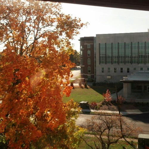 Loving the fall color and bright sunlight from my office window today #gratitude