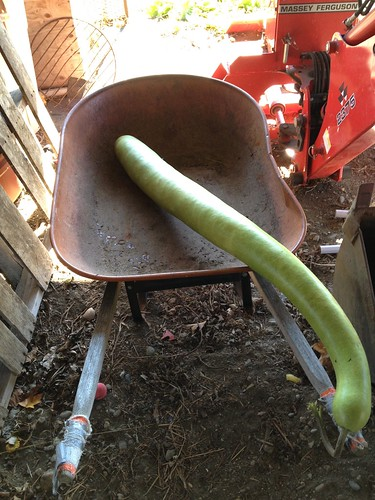 Snake in the wheelbarrow