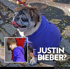 Celebrity halloween costume, Dog dressed like Justin Bieber