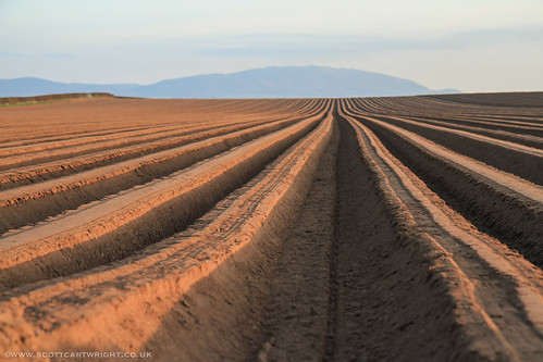 Parallel Furrows