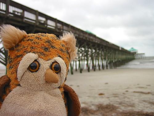 beach pier fishing southcarolina merlin follybeach