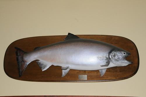 "71lb ""Tyee"" Spring Salmon"