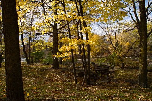 autumn hackberry carletonplace hackgerrytrees hackberrygrove