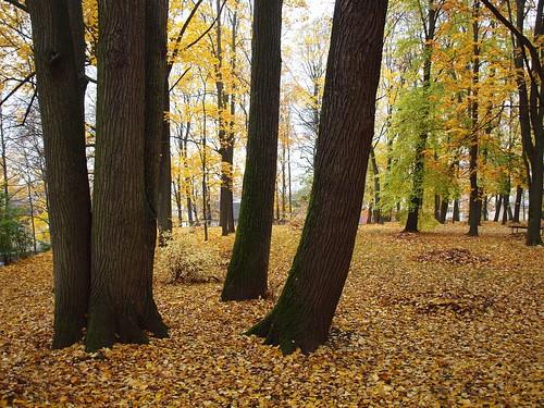 park autumn tree fall leaves yellow fog maple europe estonia linden baltic puu 4autumn baltics tartu trepp estland viro sügis estonie karlova lehed эстония vaher dorpat yuryev tarbatu treesdiestandingup pärn εσθονία yuryew