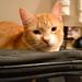 Miau y la maleta [2]