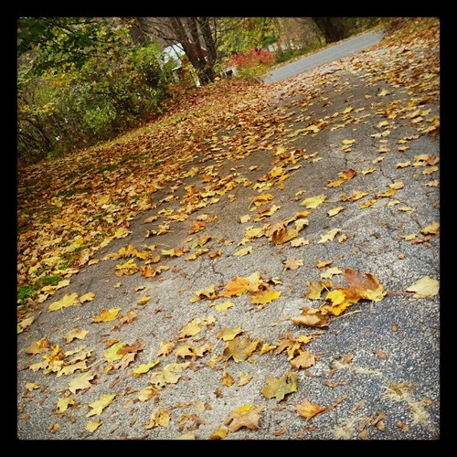 #fall #driveway #leaves #leaf #happy