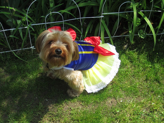 Dog Dressed as Snow White
