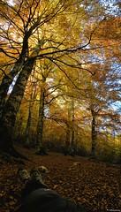 Alberi e foreste