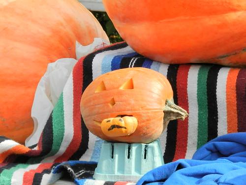 """""""It's a pumpkin eat pumpkin world"""""""