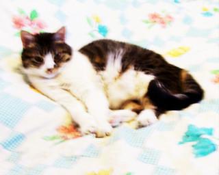 LuvLee in her boudoir 101612-001