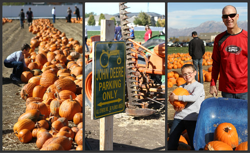PumpkinPatchCollage1