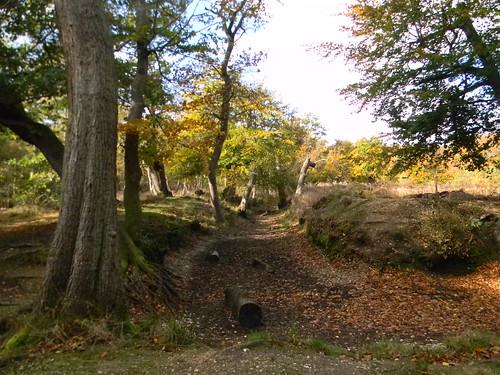 Hartley Court Moat. Burnham Beeches