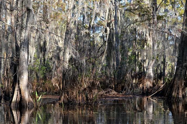Honey Island Swamp Monster Big Foot