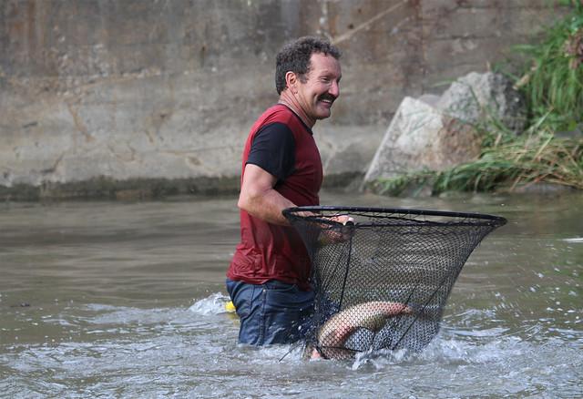 fish transfer19