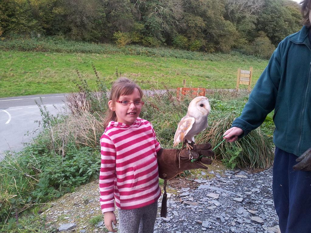 , Half term: Pembrokeshire Wildlife Centre #nablopomo
