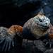Galapagos Final077 by DVSchnake
