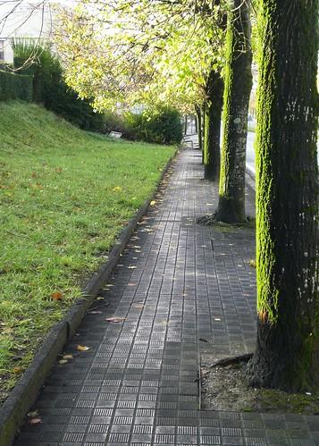 otoño 2012 068