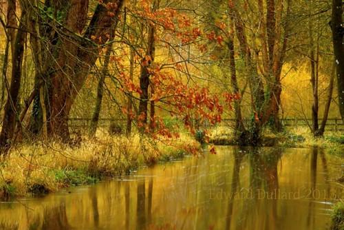 trees kilkenny ireland winter reflection nature water landscape aqua hiver emeraldisle irlanda ierland edwarddullardphotographykilkennycityireland me2youphotographylevel1 9deanstreetkilkenny