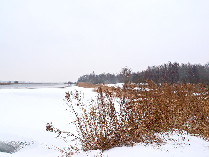 Winter in the Netherlands 2
