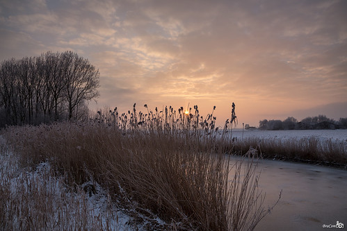trees sun mist snow holland ice reed fog clouds sunrise canon bomen hoarfrost farm sneeuw nederland thenetherlands wolken zon riet ripe ijs boerderij middelharnis zuidholland goereeoverflakkee rijp southholland zonsopkomst canonef24105mmf4lisusm bracom devliegers canoneos5dmkiii kurtpeiserexcellence