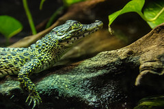 Reptile at the zoo
