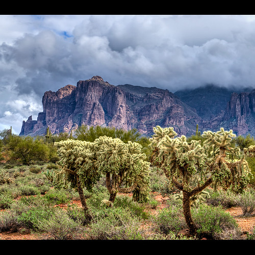 arizona cactus nature clouds landscape nikon desert cloudy ngc stormy drama cholla d800 superstitionmountains apachejunction chainfruitcholla hangingchaincholla pinnaclephotography