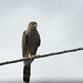 Bird on a wire, Tucson Botanical Gardens by Distraction Limited