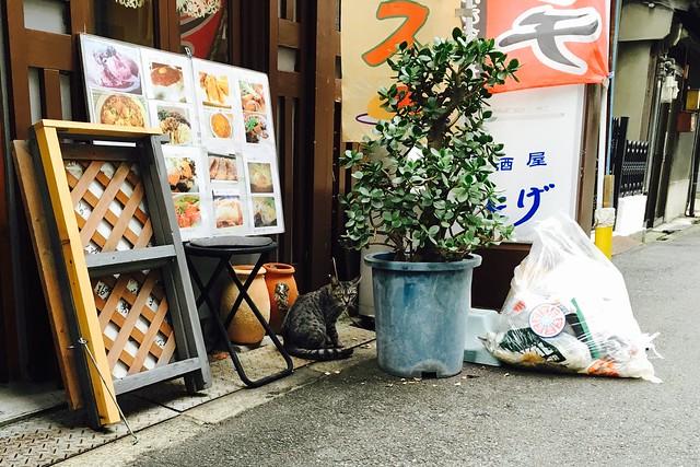Today's Cat@2016-09-16