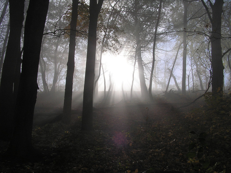 Fog in Tent Colony Woods
