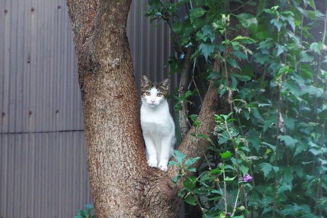 Today's Cat@2016-10-01