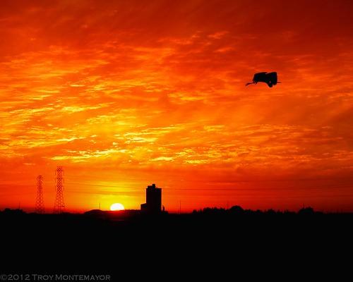 california sun silhouette clouds sunrise unitedstates tracy silo powerlines northamerica greatblueheron highvoltage centralvalley sanjoaquinvalley ardeaherodias sanjoaquincounty transmissiontower canoneos5dmarkii hollysugar