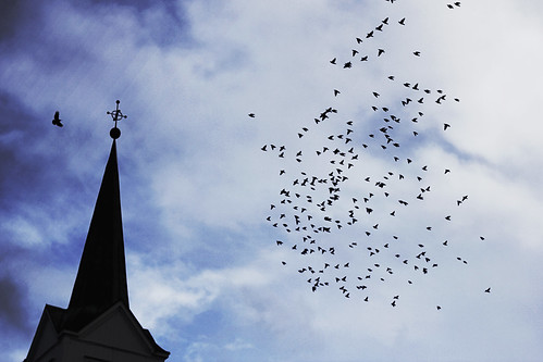 Some birds and a church