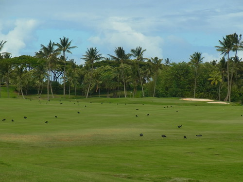 Kauai Lagoon Golf Club 380