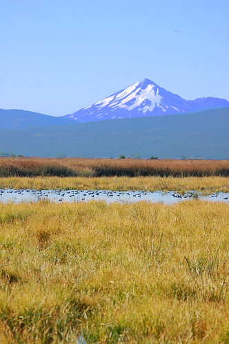 mountain birds oregon landscape view mount mountshasta nationalwildliferefuge nwr lowerklamath