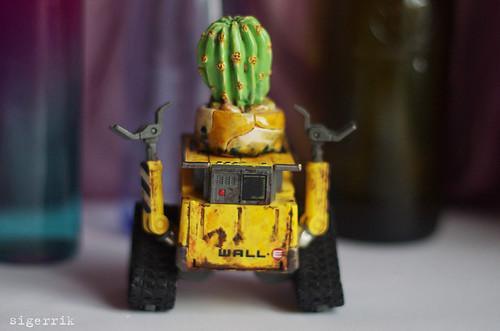 cactus-head