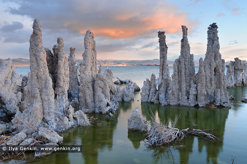 Lake Mono at Dawn, Mono Lake Tufa State Reserve, Eastern Sierra, Mono County, California, USA