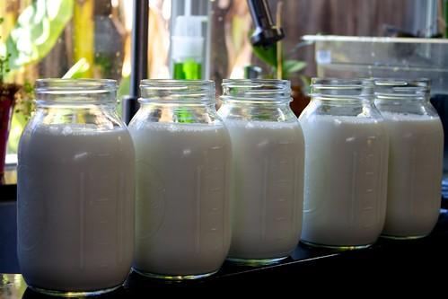 Milk Divided