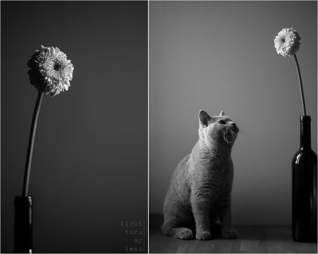 {black&white week, vol.2}: flower and cheshire cat [2/7]