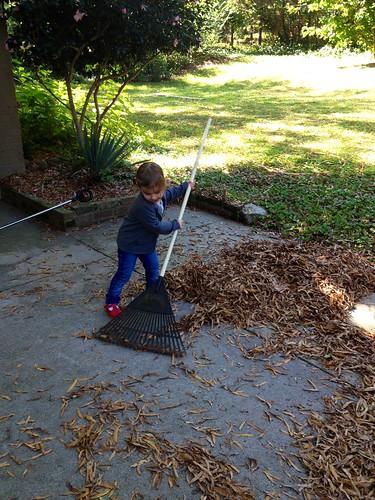 lucy raking 4
