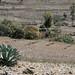 Tierras de cultivo - Farm fields cerca de Las Palmas, Región Mixteca, Oaxaca, Mexico por Lon&Queta