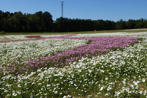 select ncdotwildflowers breastcancerawarenesssusangkomen