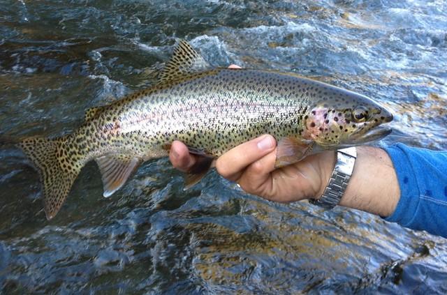 upper mckenzie wild rainbow