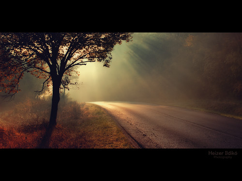 road autumn trees light leaves forest woodland woods hungary canon600d mygearandme blinkagain bestofblinkwinners rememberthatmomentlevel1
