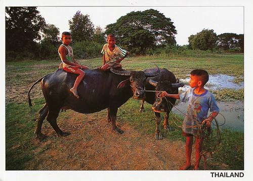 Thungyai-Huai Kha Khaeng Wildlife Sanctuaries