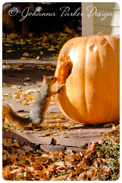 Little-Squirrel-&-Pumpkin-2