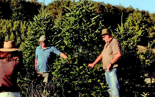German Growers Visit - Different Varieties of Trees